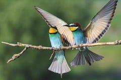 Bunter Vogel mit gerade gerichteten Flügeln Lizenzfreies Stockbild