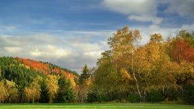 Bunter Wald Stockbilder