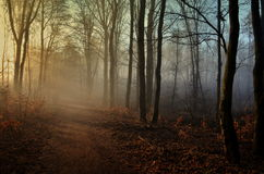 Bunter Wald des Herbstes Stockfoto