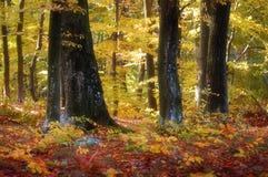 Bunter Wald im Herbst Stockbilder