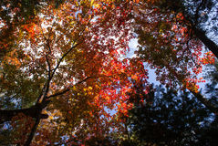 Bunter Wald im Herbst Lizenzfreie Stockfotografie