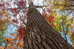 Bunter Wald im Herbst Lizenzfreies Stockbild