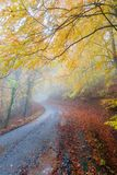 Bunter Weg des Herbstes Lizenzfreie Stockfotos