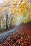 Bunter Weg des Herbstes Stockbild