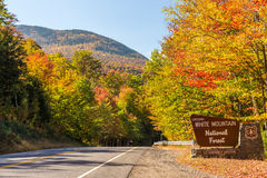 Bunter weißer Bergstaatlicher wald im Herbst, neues Hampshir Stockfotografie