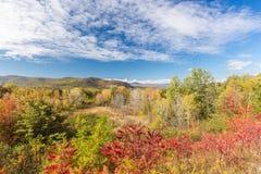 Bunter weißer Bergstaatlicher wald im Herbst, neues Hampshir Stockbild