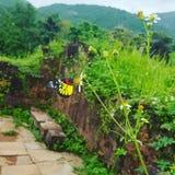 Bunter wilder Schmetterling in der Natur Lizenzfreie Stockbilder