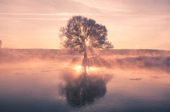 Bunter Wintermorgen lizenzfreies stockbild