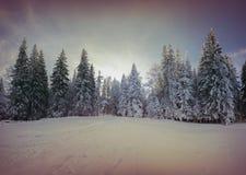 Bunter Wintermorgen im Gebirgswald Lizenzfreie Stockbilder