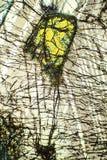 Buntes, abstraktes Muster des Minerals in einem Polarisierungsmikrographen Lizenzfreies Stockfoto