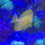Buntes Aquarium Lizenzfreie Stockfotografie