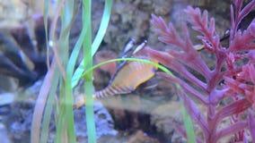 Buntes Aquarium mit netten Fischen stock footage