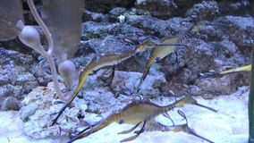 Buntes Aquarium mit vielen verschiedenen netten Fischen stock video