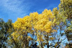 Buntes Autumn Leaves- und Baum-Fall-Laub Stockfotos