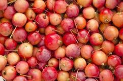 Buntes Bündel der reifen Äpfel. Stockbild