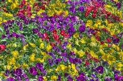 Buntes Bett der Blumen Lizenzfreie Stockbilder