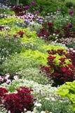 Buntes Blumenbeet Stockfotos