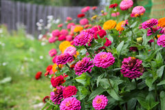 Buntes Blumenbeet Stockfoto
