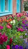 Buntes Blumenbeet im New Mexiko stockbild