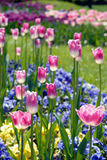 Buntes Blumenbett Lizenzfreies Stockbild