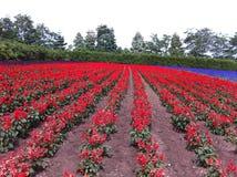 Buntes Blumenfeld herein während des Herbstes Lizenzfreie Stockbilder