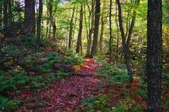 Buntes Fall-Blatt-Laub auf einem Seeuferrückzug in den Adirondack-Bergen Vibrierende rote, gelbe und orange Farben des Herbstes Lizenzfreies Stockfoto