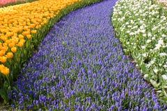 Buntes Feld der Blumen stockfoto