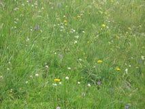 Buntes Feld der wilden Blumen Stockfotografie