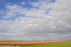 Buntes Feld und windturbine Stockfotos