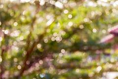 Buntes Funken und Schlag natürliches bokeh des Baumbusches für romantisches Lizenzfreie Stockbilder