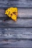 Buntes gelbes gefallenes Herbstblatt auf hölzernem grauem Hintergrund Lizenzfreie Stockbilder