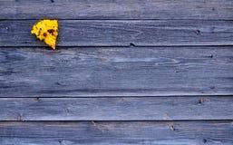 Buntes gelbes gefallenes Herbstblatt auf hölzernem grauem Hintergrund Lizenzfreies Stockfoto