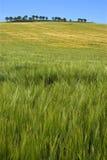 buntes Getreidefeld in der ländlichen Landschaft, Rioja Stockbild
