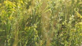 Buntes Gras stock video