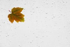 Buntes Herbstahornblatt und -regentropfen auf dem Fenster Stockbild