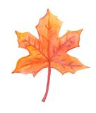Buntes Herbstahornblattaquarell Lizenzfreies Stockbild