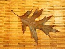 Buntes Herbstblatt, Litauen Stockfoto