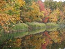 Buntes Holz reflektiert im See stockfotos