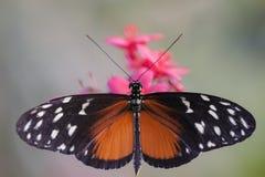 Buntes Insekt Lizenzfreie Stockfotos