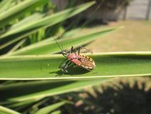 buntes Insekt Stockfotos