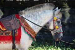 Buntes kambodschanisches zeremonielles Pferd Lizenzfreies Stockfoto