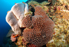 Buntes Korallenriff Lizenzfreies Stockbild