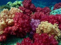 Buntes Korallenriff Lizenzfreies Stockfoto
