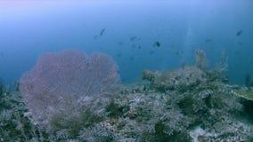 Buntes Korallenriff 4k Raja Ampat Indonesias stock footage