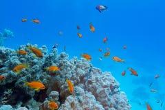 Buntes Korallenriff mit harter Koralle und exotische Fische an der Unterseite von tropischem Meer Stockbild