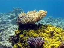 Buntes Korallenriff mit steinigen Korallen Stockbild