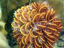 Buntes Korallenriff und Fische Stockbild