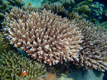 Buntes Korallenriff und Fische Stockbilder
