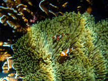 Buntes Korallenriff und Fische Lizenzfreie Stockfotos