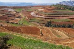 Buntes landwirtschaftliches Feld Stockbild